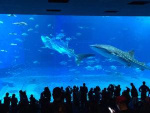 美ら海水族館の定番撮影スポット