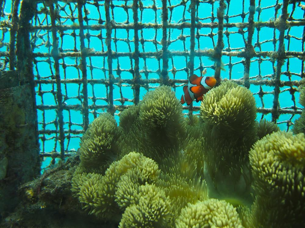 ブセナテラス海中展望台