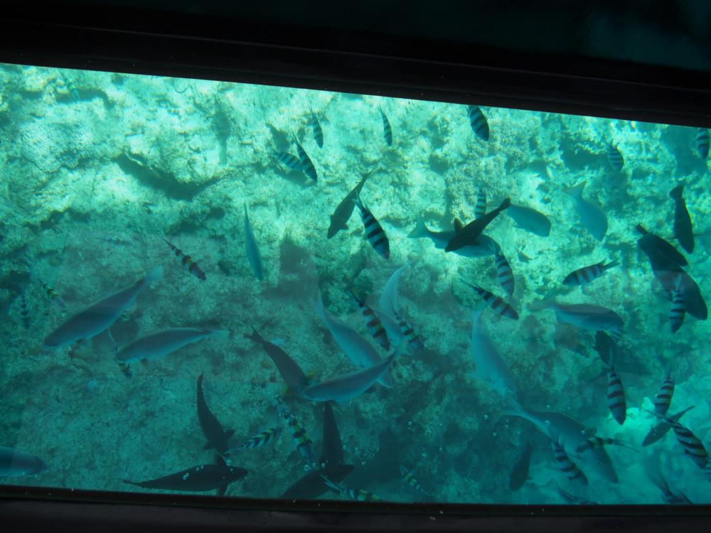 ブセナテラスのグラスボート